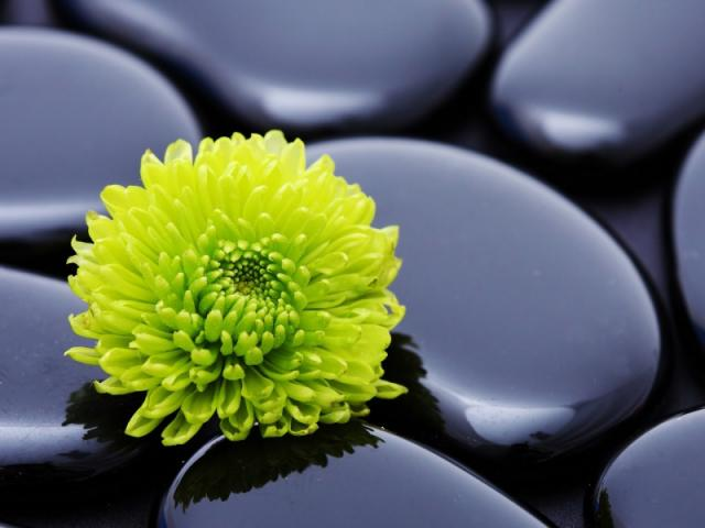flower_stone_petals_smooth_18292_800x600.jpg